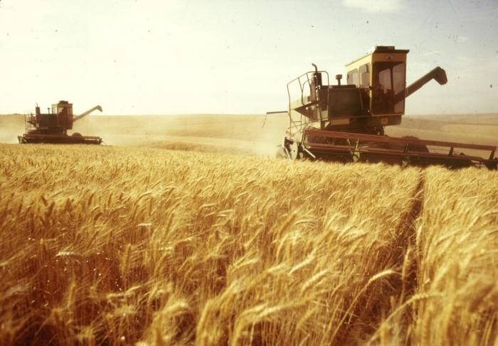 Астраханские аграрии намерены за 2 года повысить сбор урожая