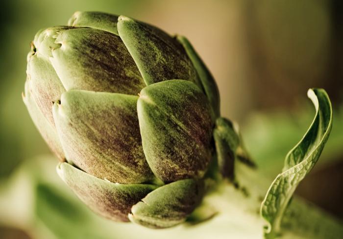 Артишок — цветок нашей кухни