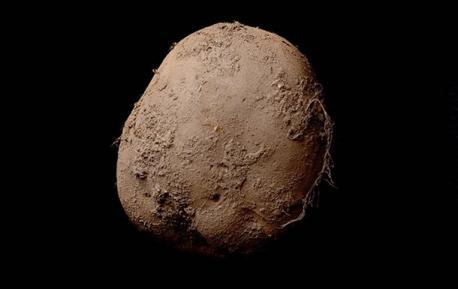 Фотографию ирландского картофеля оценили в 1 миллион долларов