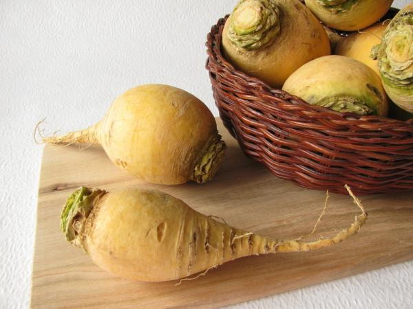 Репа – народный овощ России